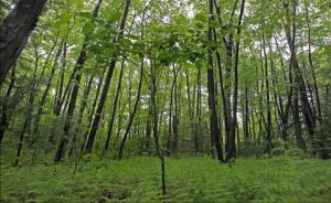 trees-large